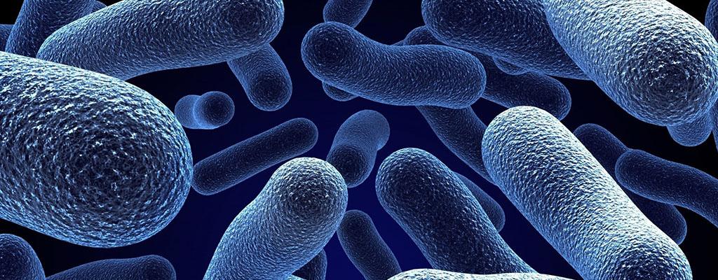 labmolecular-laboratorio-diagnostico-molecular-microbiologia-argentina