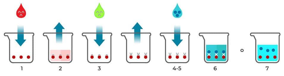 test-coronavirus-diagnostico-serologico--sars-cov-2